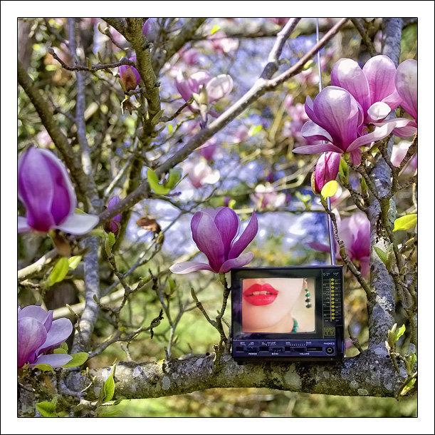 http://lotusroot.online.fr/pentax2010/last02.jpg